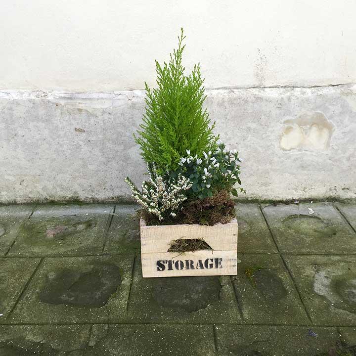 le petit jardin blanc et vert, composition de plantes composé de cyprès, campanule, bruyère le tout dans une caget en bois. Livraison dans la journée composition réalisée par reflets Fleurs
