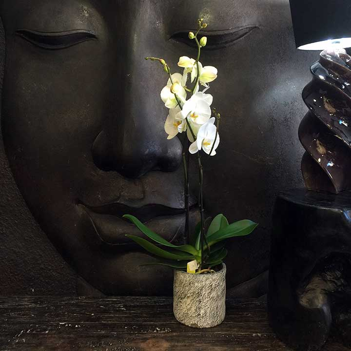 livraison orchidée blanche avec ou sans cache pot fleuriste paris reflets fleurs france